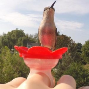Hand-Held Hummingbird Feeders
