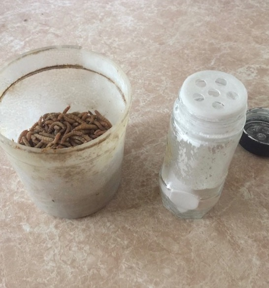 mealworms with calcium carbonate