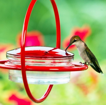 Hummingbird Feeder Hacks