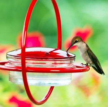 Hummingbird Feeder Hacks